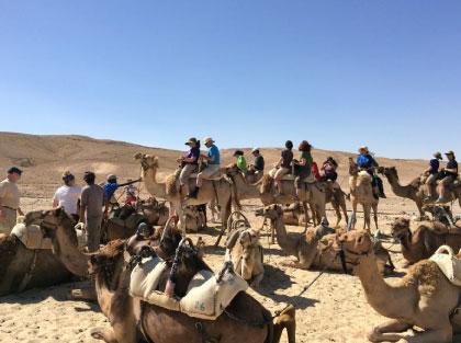 كتالوج السياحة النزيهة